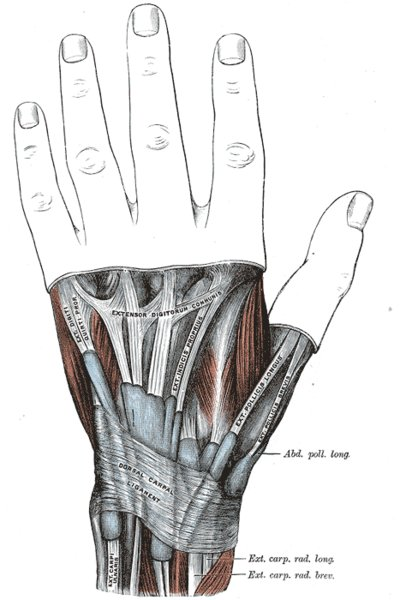 Top                View of Hand